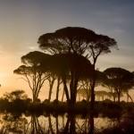 Strophylia Forest, foto: Gabriela Însurățelu